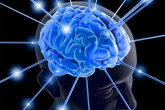golovnoj-mozg